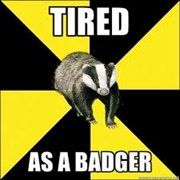 tired funny badger